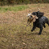 Hampshire Gundog Society Open Cocker Spaniel FT Kenilworth-155