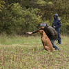 Cotswold Gundogs Peg dog Training Day-95