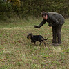 Cotswold Gundogs Peg dog Training Day-79