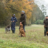 Cotswold Gundogs Peg dog Training Day-90