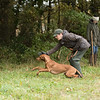Cotswold Gundogs Peg dog Training Day-104
