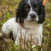 Cotswold Gundogs Peg dog Training Day-50