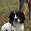 Cotswold Gundogs Peg dog Training Day-53