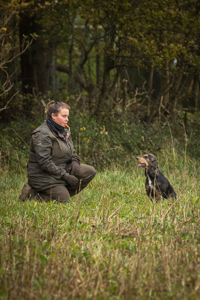 Cotswold Gundogs Peg dog Training Day-41