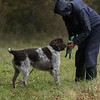 Cotswold Gundogs Peg dog Training Day-89