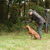 Cotswold Gundogs Peg dog Training Day-103