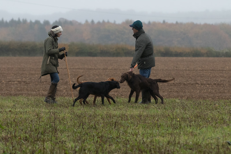 Cotswold Gundogs Peg dog Training Day-85