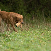 Cotswold Gundogs Peg dog Training Day-102