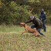 Cotswold Gundogs Peg dog Training Day-96