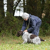 Cotswold Gundogs Peg dog Training Day-110