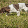 Cotswold Gundog Hunting Skills Training Day 7D-75