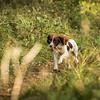 Cotswold Gundog Hunting Skills Training Day 7D-205