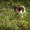 Cotswold Gundog Hunting Skills Training Day 7D-171