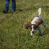 Cotswold Gundog Hunting Skills Training Day 7D-79