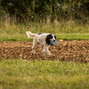 Cotswold Gundog Hunting Skills Training Day 7D-273