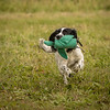 Cotswold Gundog Hunting Skills Training Day 7D-254