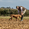 Cotswold Gundog Hunting Skills Training Day 7D-114