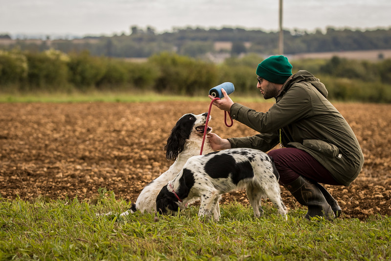 Cotswold Gundog Hunting Skills Training Day 7D-276
