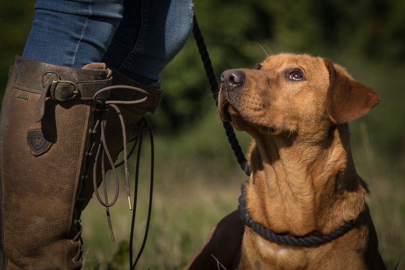 Cotswold Gundog Hunting Skills Training Day 7D-24
