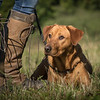 Cotswold Gundog Hunting Skills Training Day 7D-22