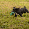 Cotswold Gundog Hunting Skills Training Day 7D-248