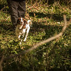 Cotswold Gundog Hunting Skills Training Day 7D-187
