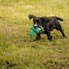 Cotswold Gundog Hunting Skills Training Day 7D-247