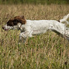 Cotswold Gundog Hunting Skills Training Day 7D-68