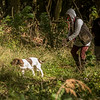 Cotswold Gundog Hunting Skills Training Day 7D-161