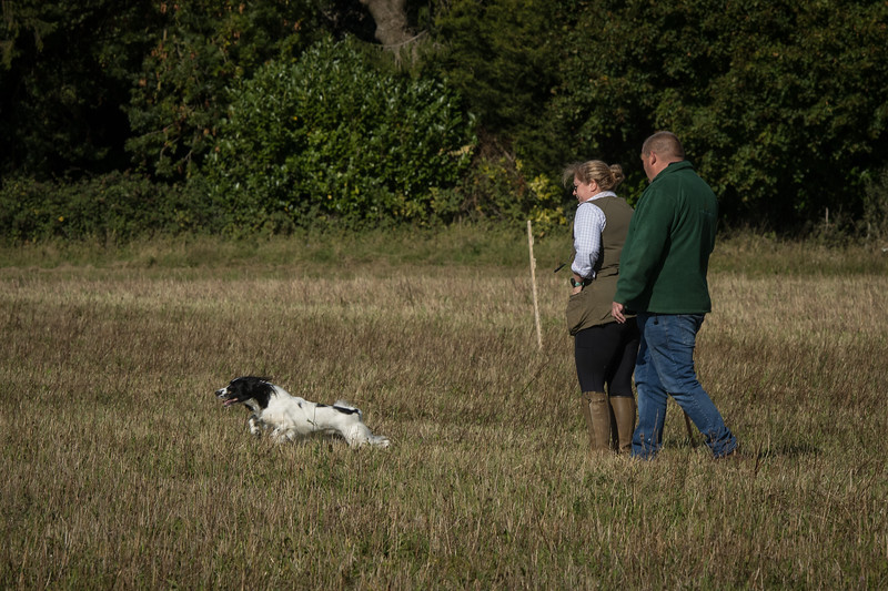 Cotswold Gundog Hunting Skills Training Day 7D-26