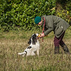 Cotswold Gundog Hunting Skills Training Day 7D-59