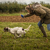Cotswold Gundog Hunting Skills Training Day 7D-262