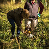 Cotswold Gundog Hunting Skills Training Day 7D-207