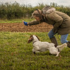 Cotswold Gundog Hunting Skills Training Day 7D-261