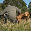 Cotswold Gundog Hunting Skills Training Day 7D-43