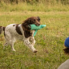 Cotswold Gundog Hunting Skills Training Day 7D-246