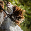 Cotswold Gundog Hunting Skills Training Day 7D-101