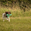 Cotswold Gundog Hunting Skills Training Day 7D-245
