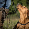 Cotswold Gundog Hunting Skills Training Day 7D-23