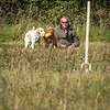 Cotswold Gundog Hunting Skills Training Day 7D-49