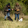 Cotswold Gundog Hunting Skills Training Day 7D-140