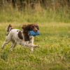 Cotswold Gundog Hunting Skills Training Day 7D-267