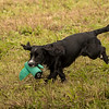 Cotswold Gundog Hunting Skills Training Day 7D-250