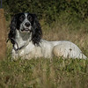 Cotswold Gundog Hunting Skills Training Day 7D-14