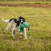 Cotswold Gundog Hunting Skills Training Day 7D-256