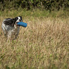 Cotswold Gundog Hunting Skills Training Day 7D-54