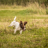 Cotswold Gundog Hunting Skills Training Day 7D-263
