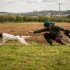 Cotswold Gundog Hunting Skills Training Day 7D-272