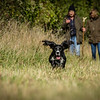 Cotswold Gundog Hunting Skills Training Day 7D-138