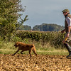 Cotswold Gundog Hunting Skills Training Day 7D-116